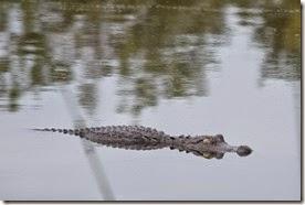 Gator eyes closed