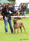 20100513-Bullmastiff-Clubmatch_31093.jpg