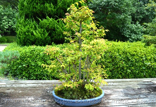 Glória Ishizaka -   Kyoto Botanical Garden 2012 - 45