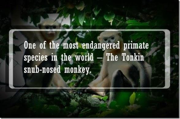 interesting-animal-facts-010
