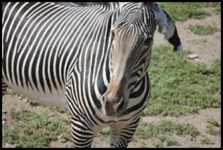 Zoo5 045