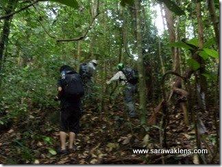 jungle_walk_sarawak