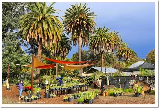 Ruth Bancroft Garden Black Friday sale extended until 12/4/14