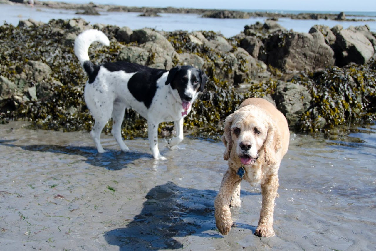 Chewy and Abby in the Cornish coast