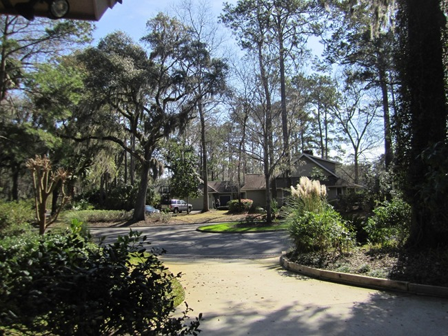 Savannah 027