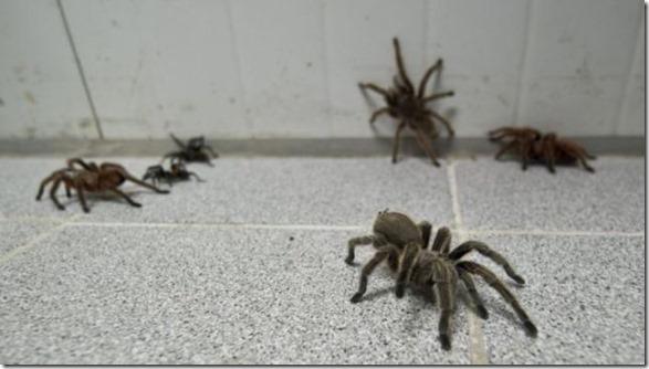 spider-farmer-juan-15