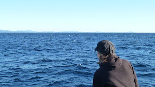 Whale watching.