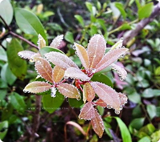 Dew-drops-(1)