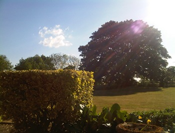 Sunny Norfolk