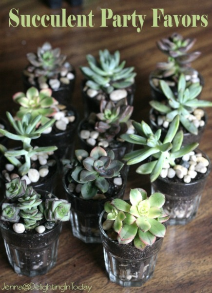 succulent_party_favor diy