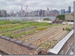 lucasfoglia_rooftopfarm_065