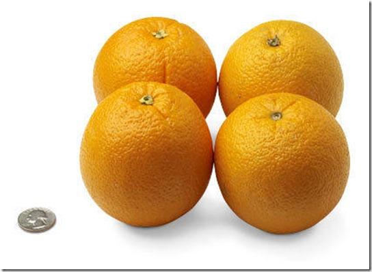 31-oranges[1]