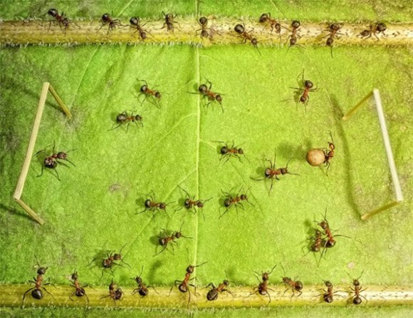 Life-of-Ants-Andrey-Pavlov-10