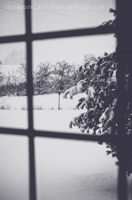 SycamoreLane Photography-Through my window