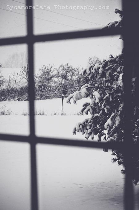 SycamoreLane Photography-Through my window