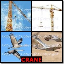 CRANE- 4 Pics 1 Word Answers 3 Letters