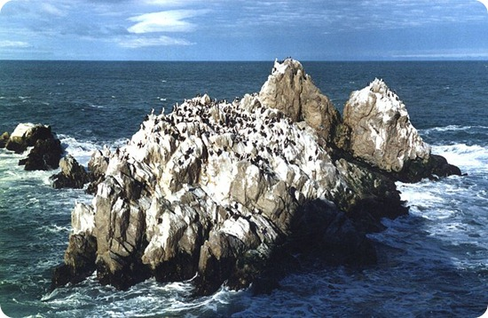 Cabo_Blanco_cormoranera