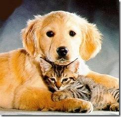 Últimas fechas de vacunación antirrábica para perros y gatos