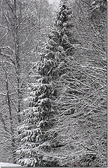 Pines_Dec292012