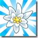 viral_alps_edelweiss_75x75