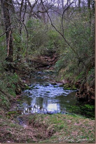 03-22-14 Buzzard Creek on Natchez Trace 07