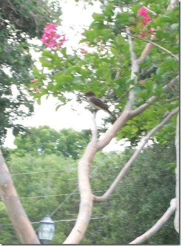 Baby Birds 012