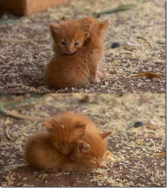 funny-animals-cute-17