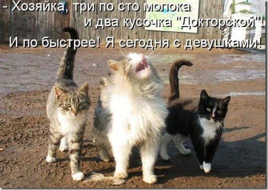 87c4864120a0b64868e5b89354c_prev