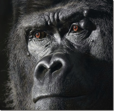tim-flach-poze ochii animalelor