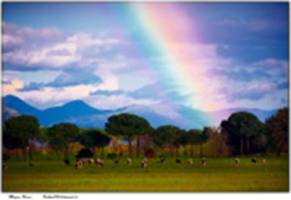 rainbow_03-5193498