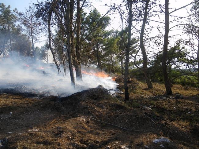 Καταγγελία για τη φωτιά στον πευκώνα στο Κουρτικό