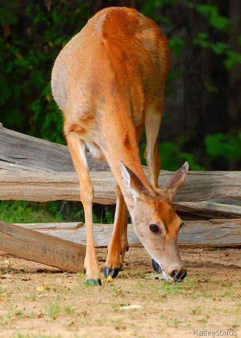 11. WT deer Ft. donaldson-kab