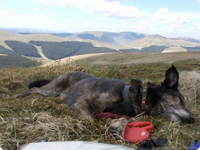 superedawg conks out on ettrick pen
