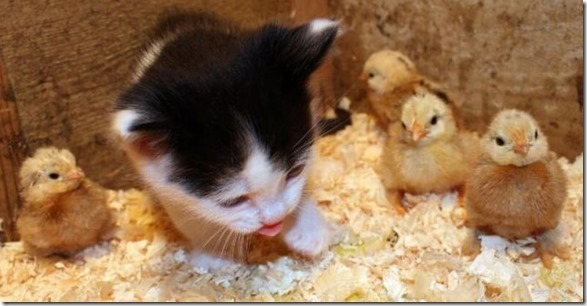 funny-animals-cute-29