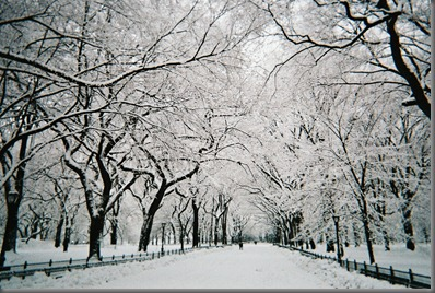 Central_Park_walkway_under_snow,_NYC,_February_2010