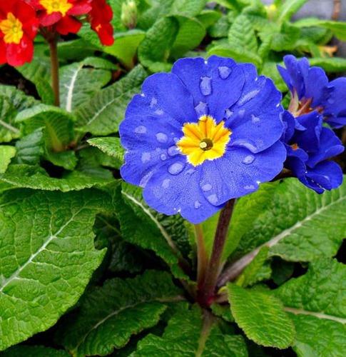 48. Flor de primavera