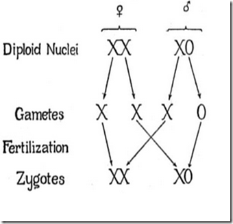 Kromosom Homolog