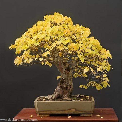 bonsais arvores em miniatura desbaratinando (32)