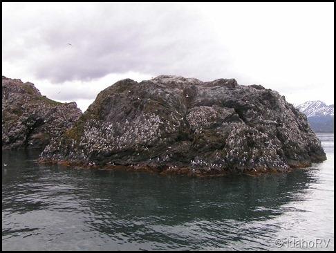 Gull-Island