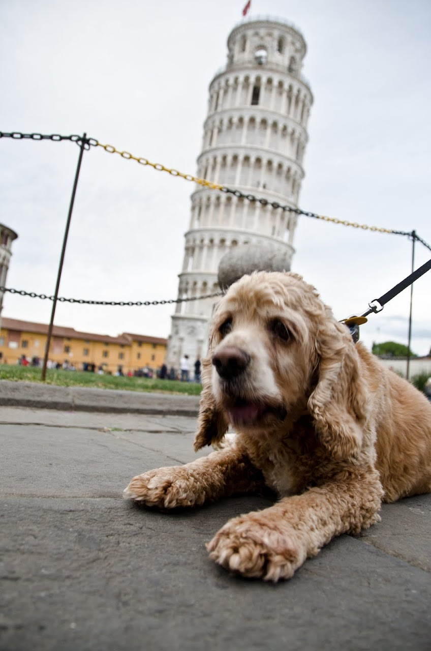 Chewy at the Leaning Tower of Pisa