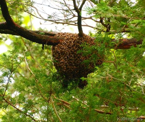 9. bee swarm-kab