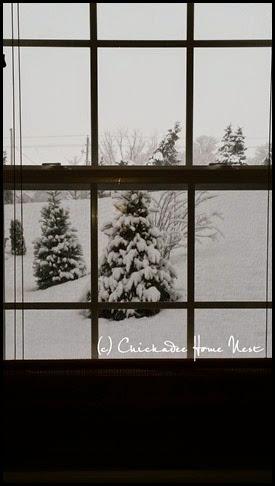 Snow, Winter Wonderland (6)
