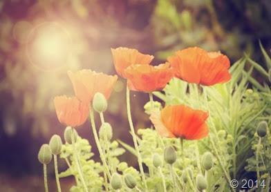 flowers-139136937323p