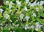 Glória Ishizaka -   Kyoto Botanical Garden 2012 - 128