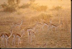 October 18 2012 Impala's at Sunrise