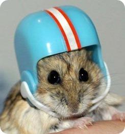 casco hamster