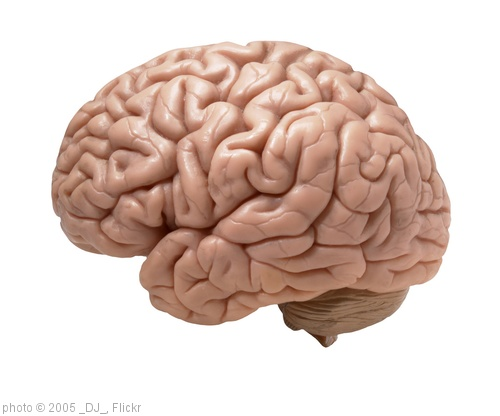 'human brain on white background' photo (c) 2005, _DJ_ - license: http://creativecommons.org/licenses/by-sa/2.0/