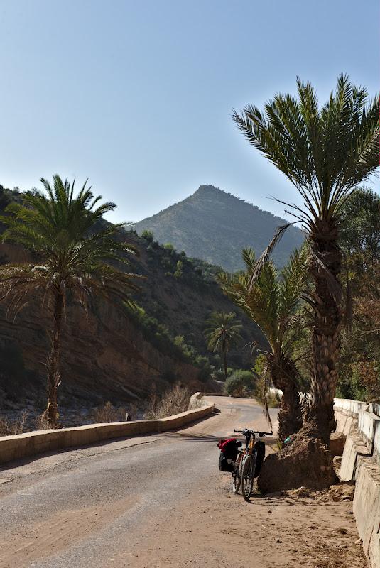 Cine-a pus palmierul in drum....