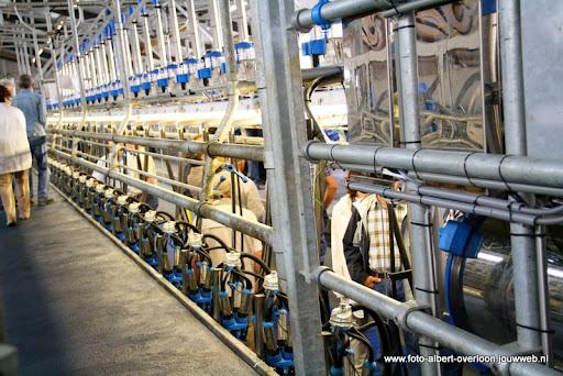 koeien kijken boer martij 18-06-2011 (34).JPG