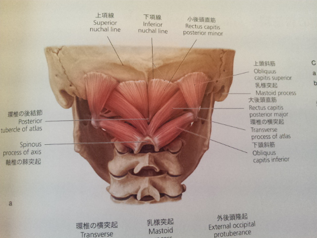 Muscle Pull Below My Right Rib Cage 25